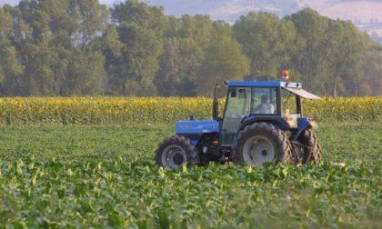 Stroncato da malore mentre lavora nei campi: il corpo trovato in aperta campagna