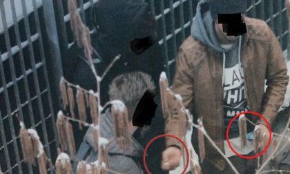 Spacciavano davanti alle scuole, banda di sudamericani in manette FOTO