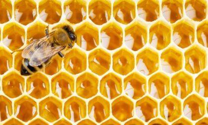Allerta maltempo sconvolge le api - 50% di miele