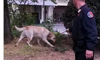Carabinieri con cane anti droga Grinder a scuola