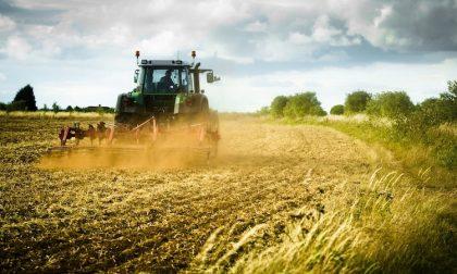 Se le aree agricole si trasformano in parchi naturali a rimetterci sono gli agricoltori