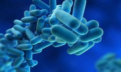 Legionella in Lombardia, un caso anche a Cremona