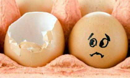 Rischio salmonella: ritirato lotto di uova fresche
