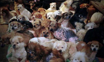 50 cani in casa tra topi, rifiuti ed escrementi