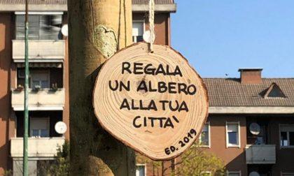 """""""Regala un albero alla tua città"""", in settimana saranno messe a dimora altre 15 piante"""