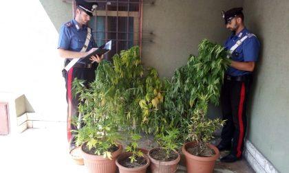 """Coltiva marijuana in cortile, i vicini fanno la """"spia"""": arrestato"""