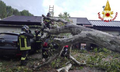 Il maltempo è arrivato: diversi allagamenti e alberi caduti