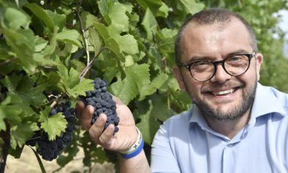 Al via la vendemmia, ma previsto già – 20%di produzione di vino causa maltempo