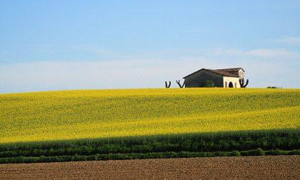 Giovani in agricoltura: fondi per 100mila euro a 5 aziende cremonesi