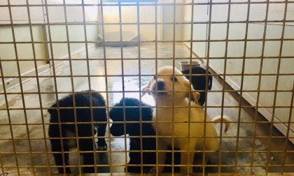 """Boom di adozioni al parco rifugio""""La cuccia e il nido""""di Calvatone"""