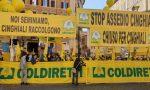 Emergenza cinghiali: è protesta! A Cremona campi devastati e allarme incidenti sulle strade