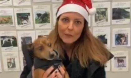 """""""Un cane per le feste"""": adotta un cucciolo per Natale e poi (se vuoi) puoi restituirlo"""