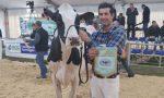Fiera di Sant'Apollonia 2020, ecco le migliori vacche da latte