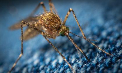 Il Comune di Cremona dichiara guerra alle zanzare: al via gli interventi di disinfestazione