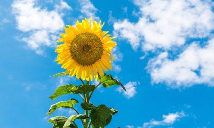 Si rafforza l'alta pressione, più soleggiato e temperature su   Previsioni meteo weekend