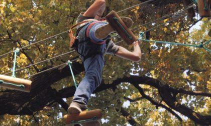 Colonie Padane, riapre ilParcoAvventura: percorso super baby e salto nel vuotoFOTO
