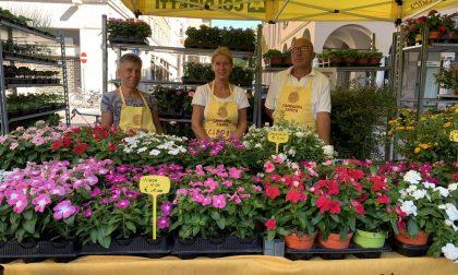 Campagna Amica, domani tornano i fiori al Mercato di Cremona