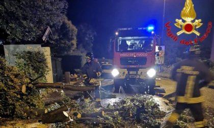 Forte temporale nella notte, allagamenti e diversi alberi caduti
