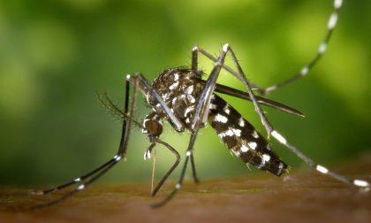 Iniziati i trattamenti per il contenimento delle zanzare