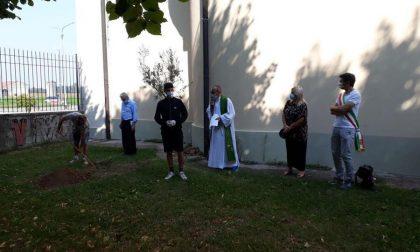 Lacrime e commozione al Boschetto: un ulivo in ricordo delle vittime cremonesi del Covid