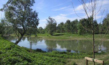 """""""BioBlitz"""" nel Parco del Po e del Morbasco: un giorno alla scoperta della biodiversità e della flora e della fauna autoctone"""