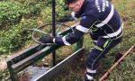 Weekend impegnativo per la Protezione Civile impegnata sui fiumi Adda, Serio e Po