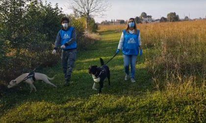 Covid e animali: 200 cuccioli presi in carico dai volontari dei padroni malati TRE STORIE DI SOLIDARIETA' – VIDEO