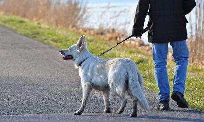 Passeggiare con il cane: le regole e i comportamenti in vigore da oggi