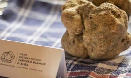 """""""Abbiamo riprodotto il tartufo bianco di Alba"""": la """"grandeur"""" francese che fa arrabbiare l'Italia"""