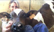 Studenti in classe a rischio Covid, per risolvere il problema Rolfi propone lezioni scolastiche all'aperto in fattoria