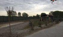 Ventenne denunciato per aver rubato…10 alberi