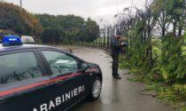 Minorenne scappa di casa e incendia 50 alberi: danni per 7mila euro