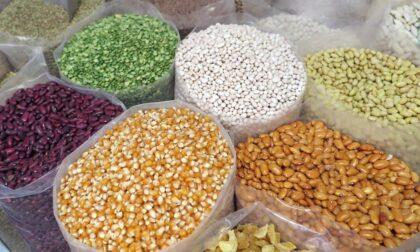 Ruba 200 chili semi di mais da un'azienda agricola, denunciato 49enne