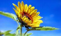 Sole, caldo e sensazione di afa | Meteo Lombardia