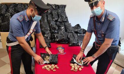 Sequestrati oltre 26 chili di semi di papavero da oppio, denunciato 39enne