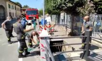 Cade in una roggia, 56enne portato in ospedale in ipotermia