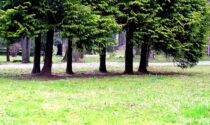Piano Verde Urbano: 133 alberi da abbattere, ma saranno piantumate 190 nuove piante
