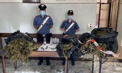 In un capannone in disuso 10 chili di marijuana e 21 piante di canapa